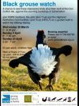 Black grouse watch